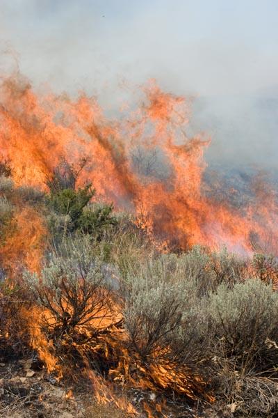 фото Brushfire